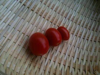 トマトかご